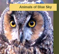 animals of Blue Sky