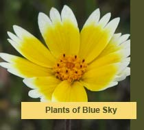 Plants of Blue Sky